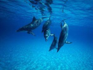delphin3