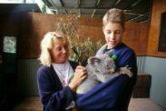 koala06