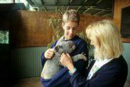 koala07