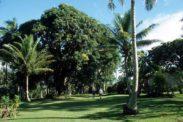 taveuni007