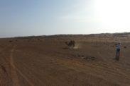 desertnightscamp3