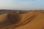 desertnightscamp41