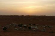 desertnightscamp46