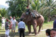 elefant05