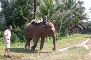 elefant07