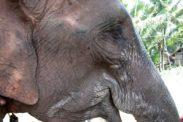 elefant09