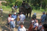 elefant10