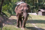 elefant16