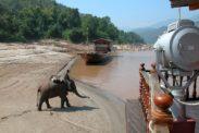 elefant19